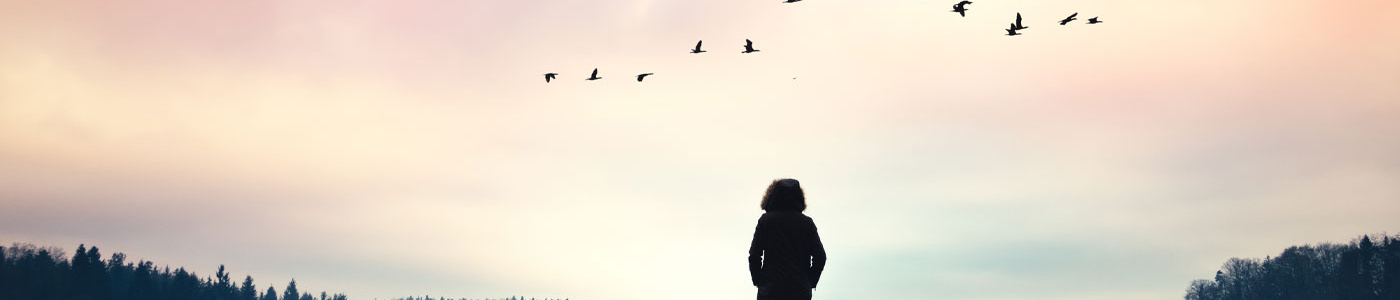 Person looking at a sunset with birds in the air