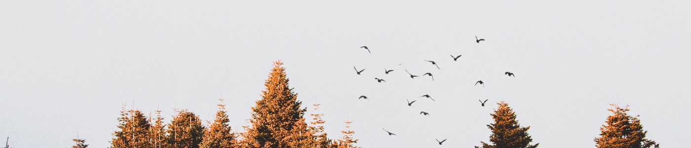 Birds flying from trees