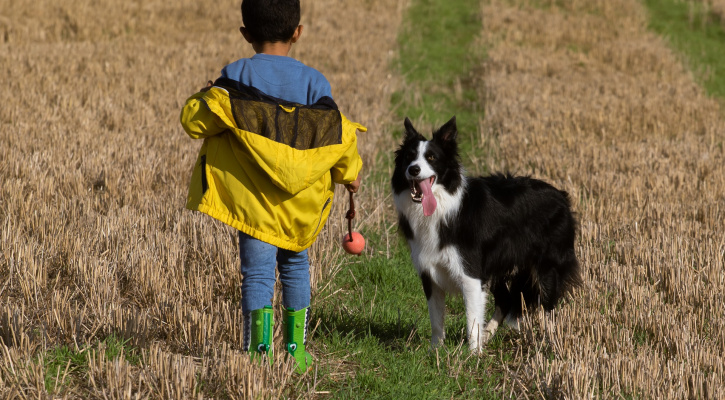 Boy and dog in field/Image by TheOtherKev from Pixabay